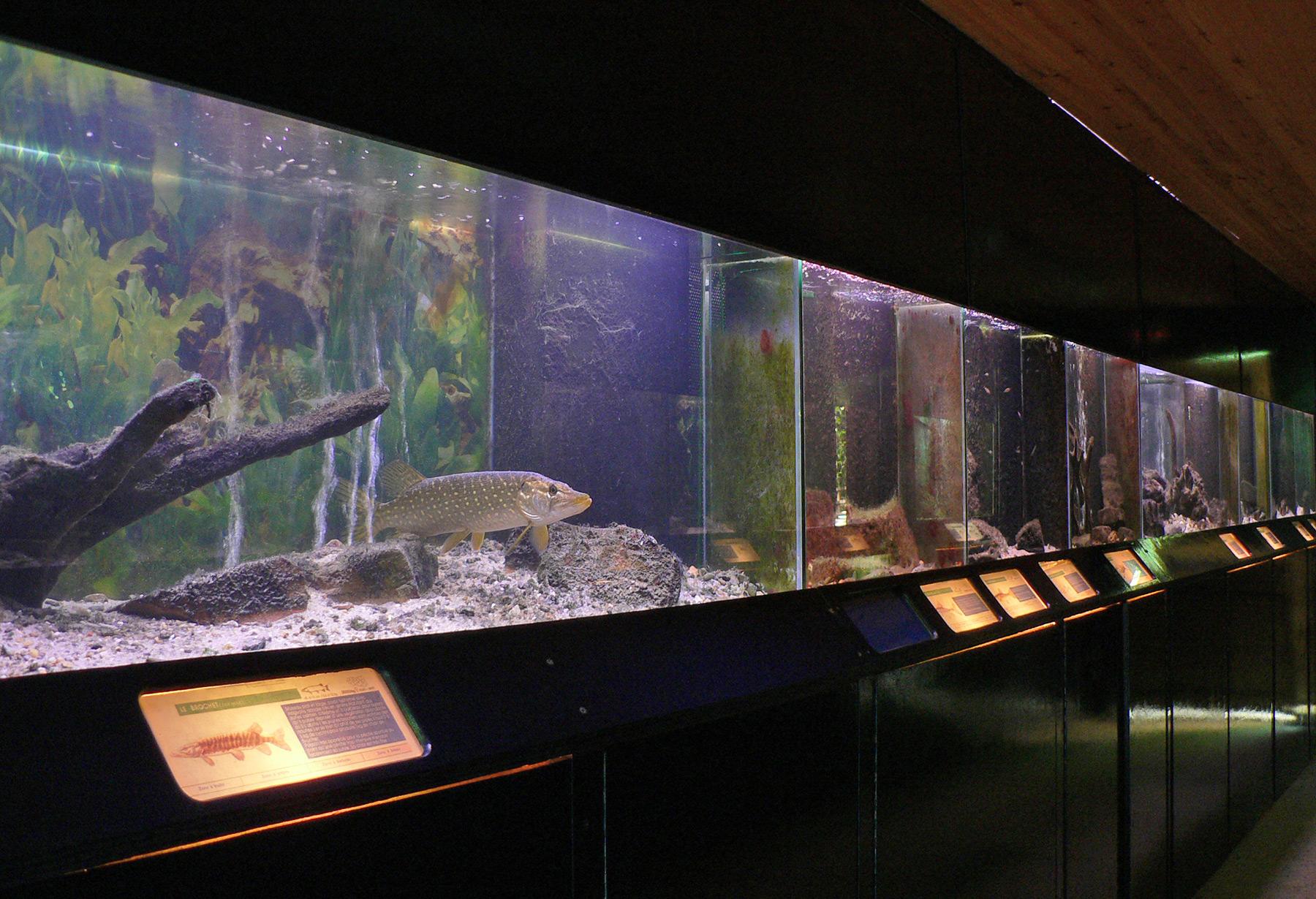 Aquarium Bambois